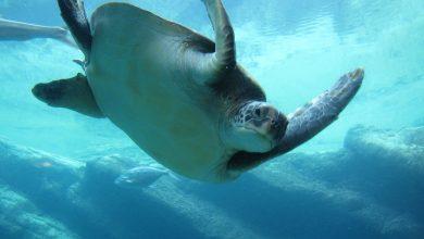 حيوانات تعيش في الماء