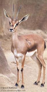 الحيوانات والنباتات التي تعيش في الصحراء بالأسماء والصور مجلة محطات