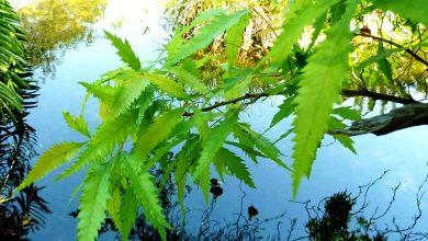 7 نباتات خطيرة وسامة